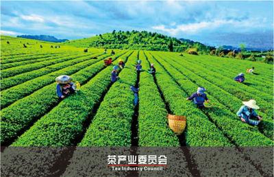 茶产业委员会.jpg